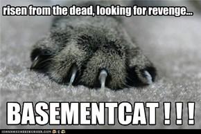 aBasementcat seeks revenge