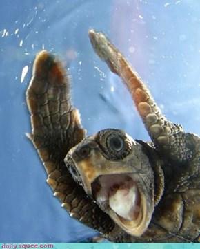 Woah! I'm A Turtle!