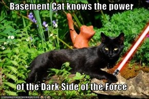 Basement Cat knows the power  of the Dark Side of the Force