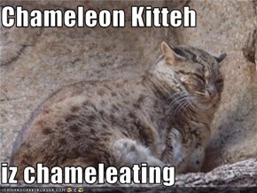 Chameleon Kitteh  iz chameleating