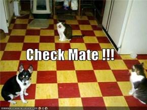 Check Mate !!!