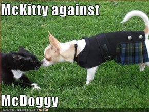 McKitty against  McDoggy