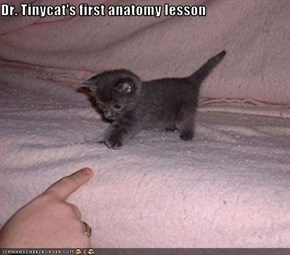 Dr. Tinycat's first anatomy lesson