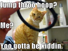 Jump throo hoop? Me? Yoo gotta be kiddin.