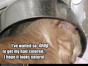 I've waited so                 to get my hair colored... I hope it looks natural