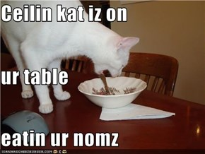 Ceilin kat iz on ur table eatin ur nomz