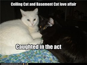 Ceiling Cat and Basement Cat love affair