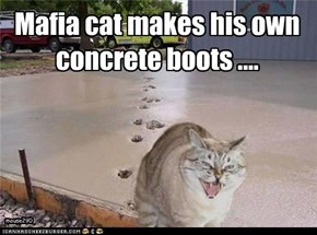 Mafia cat makes his own concrete boots ....