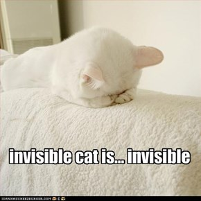 invisible cat is... invisible