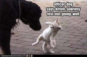 officer  dog says  kitteh  sobriety  test  not  going  well