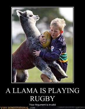 A LLAMA IS PLAYING RUGBY