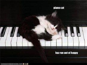 piano cat