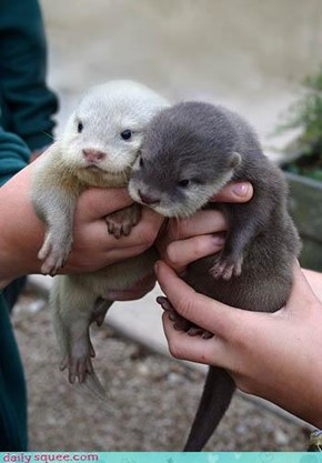 Otter Be in Love