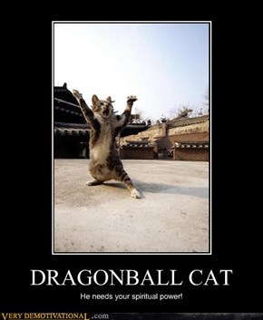 DRAGONBALL CAT