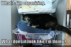 What?  I'm organizing.  What does it look like I'm doing?