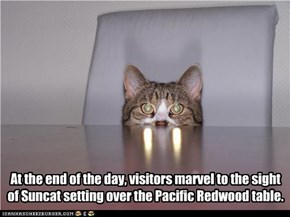 At the end of the day, visitors marvel to the sight  of Suncat setting over the Pacific Redwood table.