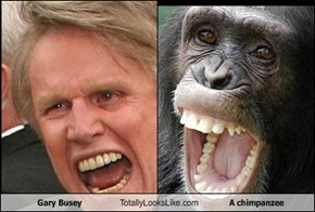 Gary Busey Totally Looks Like A chimpanzee