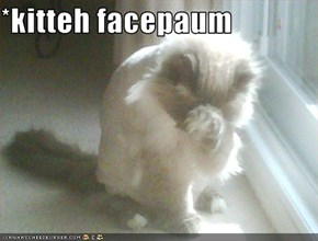 *kitteh facepaum