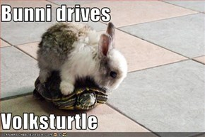 Bunni drives   Volksturtle