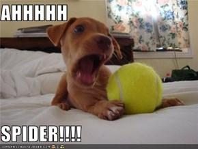 AHHHHH  SPIDER!!!!