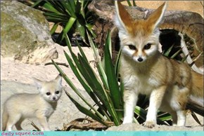Momma and Baby Fennecs!