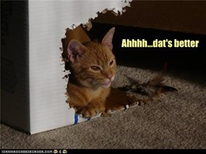 Kitty does a remodel
