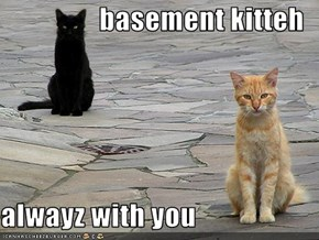 basement kitteh  alwayz with you