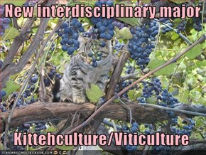 New interdisciplinary major    Kittehculture/Viticulture