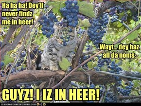 Ha ha ha! Dey'll never findz me in heer!