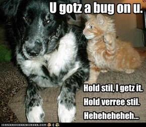 U gotz a bug on u.