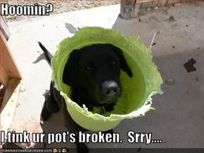 Hoomin?  I tink ur pot's broken.  Srry....