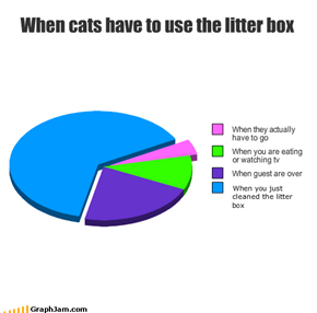 When cats have to use the litter box