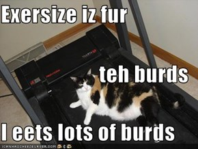Exersize iz fur  teh burds I eets lots of burds