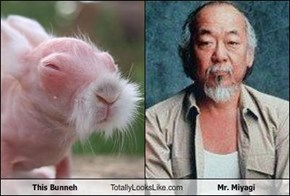 This Bunneh Totally Looks Like Mr. Miyagi