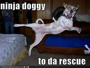 ninja doggy  to da rescue