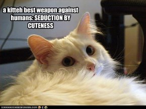a kitteh best weapon against humans: SEDUCTION BY CUTENESS