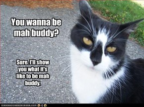 You wanna be mah buddy?