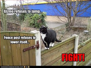Gizmo refuses to jump...