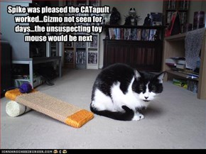 Spike was pleased the CATapult worked...Gizmo not seen for days...the unsuspecting toy mouse would be next