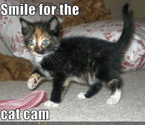 Smile for the  cat cam