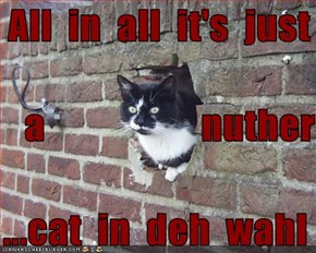 All  in  all  it's  just      a                    nuther   ...cat  in  deh  wahl