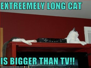 EXTREEMELY LONG CAT  IS BIGGER THAN TV!!