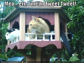 Meo....err, I mean Tweet Tweet!
