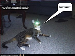 ever wonder why cats eyes glow, its because they hold the keys to other dimensions and worlds!