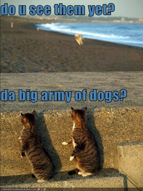 do u see them yet? da big army of dogs?