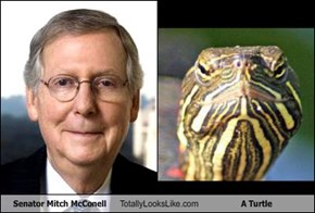 Senator Mitch McConell Totally Looks Like A Turtle