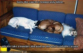 Sorry the couch is temporarily filled...  please take a number and wait for the next available cusion