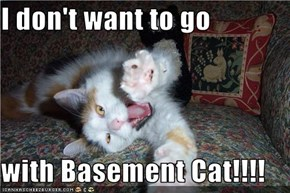 I don't want to go  with Basement Cat!!!!
