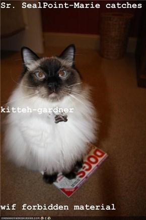 Sr. SealPoint-Marie catches kitteh-gardner  wif forbidden material