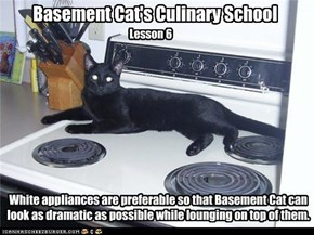 Basement Cat's Culinary School, Lesson 6